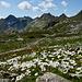 Margritenwiese bei der Cap. Cadlimo mit Blick bis zum Pizzo Centrale