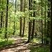 Der Steig leitet durch reizvollen Mischwald.