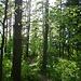 Unterwegs im dichten Mischwald über dem Tal Prielom Hornádu.