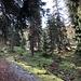 Langer, erfrischender Aufstieg durch herrlichen Wald.