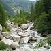 Die wild schäumende Bondasca im grünen Tal