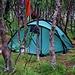 Zahlreiche Zelte im lichten Wald kündigten an, dass es zur Fjällstation nicht mehr weit war.