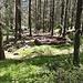 Gemütlicher Grillplatz im Wald.