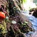 Dem Pilz gefällt's ...uns auch, es fliesst nun Wasser :-D