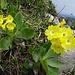 ... und weiterer Blumenpracht ...