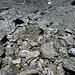wieder im Abstieg, beim Einstieg in die Rinne am Grat ist Vorsicht angesagt, das Gestein ist alles locker, jeder Handgriff muss überlegt sein.