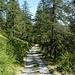 la lunga sterrata che conduce all'Alpe Fuori