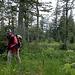 Zuerst geht's kaum ansteigend durch einen schönen Wald (T2).