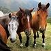Trio Lescano : mormoran in coro, i tuli-, tuli-, tuli-, tulipan.!