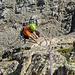 Tolle, unglaublich steile 2.SL