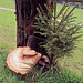 ein mega Baumpilz
