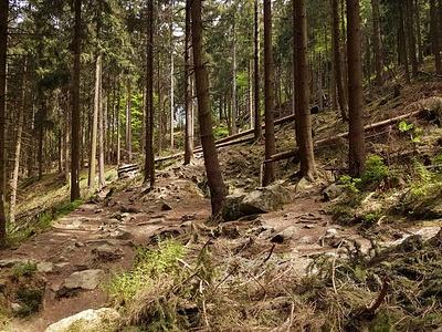 Hang im Teutoburger Wald. © dasMue