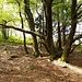 Baum im Teutoburger Wald. © dasMue