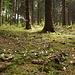 Blümkes im Teutoburger Wald. © dasMue