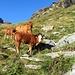 Prati dell' Alp de Mucia