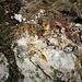 Vi sono moltissimi minerali degni di nota.