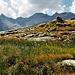 Altri laghetti ed altri Eriofori.