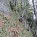Senkrechter Steilgrasabschnitt mit bereits viel rutschigem Laub