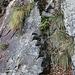 la ripida rampetta rocciosa scalinata