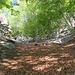 il ripido pendio boscoso che porta allo splugo