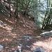 veduta dall'alto del ripido pendio boscoso