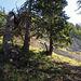 ab hier geht es im T4 Gelände direkt hinauf zum Hinterfallenchopf, hier geht es nach rechts um die Bäume herum und nachher nach links zum Felsen hinauf.