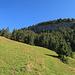 ab hier geht es weglos über die Alpwiesen hinauf nach Ober Scherlet