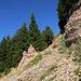 es ist rutschig auf den Nagelfluh Steinen im steilen Gelände,