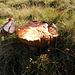ein Riesen-Pilz auf dem Pfingstboden