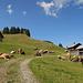ein idyllischer Bauernhof auf Storlen