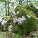 viele Steine sind mit Unmengen von Moss überwachsen