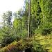 Herbstliches Ambiente. Der Damenpfad ist überwiegend ein schöner Singletrail, um dieses Wort endlich auch mal zu benutzen....