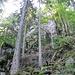 Weit hinten im Tal wurde es dann steiler und erste Felsen tauchten auf