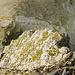 Tiefblick wenige Meter unterhalb des Gipfels auf den oberen, brüchigen Teil der Aufstiegsroute.