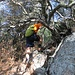Superando alcuni grossi arbusti che sono molto cresciuti rispetto a sei anni fa, si arriva sull'ultimo tratto di ripida cresta che porta alla cima.