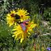 Bunte Blumen und Insekten