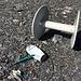 Im Aufstieg zum Glarner Vorab eingesammelter Müll