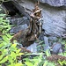 Reste des einstigen Handlaufes unterhalb Paglino