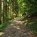 Wanderweg zum Baumwipfelpfad
