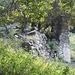 Ecco le rovine di Corte Vecchia<br /><br />Volutamente non ho fotografato un moderno ed orribile capanno, quasi sicuamente usato dai cacciatori, e posto vicino alla Corte Vecchia stessa.