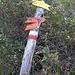 Ecco l' incrocio con il sentiero e... con il palo delle indicazioni miseramente a terra...