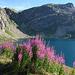 discesa Colle Nivolet Lago Agnel