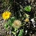 Sommer und Herbst auch in der Blumenwelt