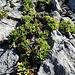 Vegetation: kleinste Spalten werden genutzt