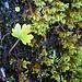 Ein Blatt wächst aus dem Moss.