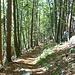 Der Abstieg verläuft meist durch dichten Wald.
