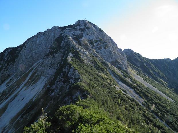 Aiplspitze Nordgrat- bis zum Gratbeginn muss noch eine leicht unangenehme Passage durch Latschen auf schmierigen Boden bewältigt werden.