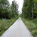 Schnurgerade Waldwege