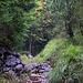 Gleich oberhalb des Chimiboden (1206m) geht der Bergweg zur Biwaldalp durch einen schönen Bergwald.