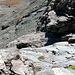 Il canaletto dove abbiamo arrampicato, anche grazie alla corda portata da Francesco. In pratica NON serve ... ma oggi senza erano ca...voli
